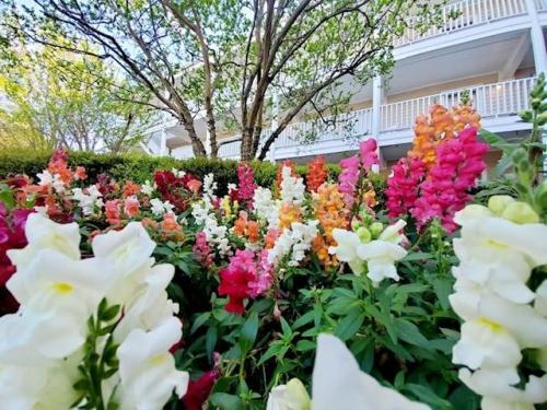 flowers courtyard
