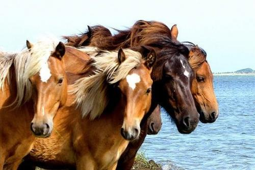 norm kenneally horses
